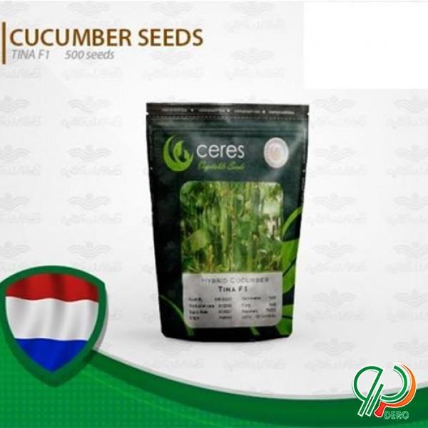 فروش بذر خیار گلخانه ای تینا هلندی