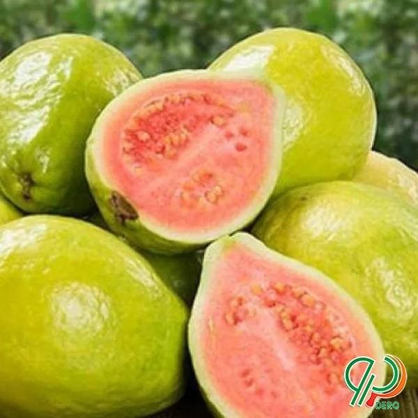 فروش بذر میوه پاپایا وگواوا