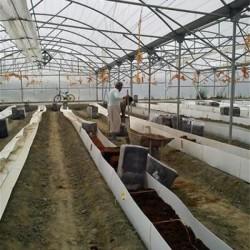 تولید و فروش نایلون کشاورزی - نایلون عریض