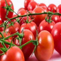 فروش بذر گوجه فرنگی