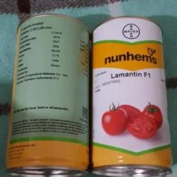 بذر گوجه لمنتین 6083