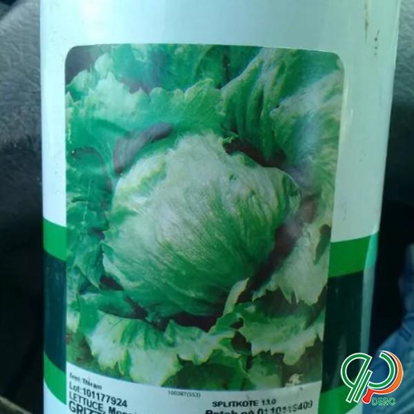فروش بذر کاهو سالادی