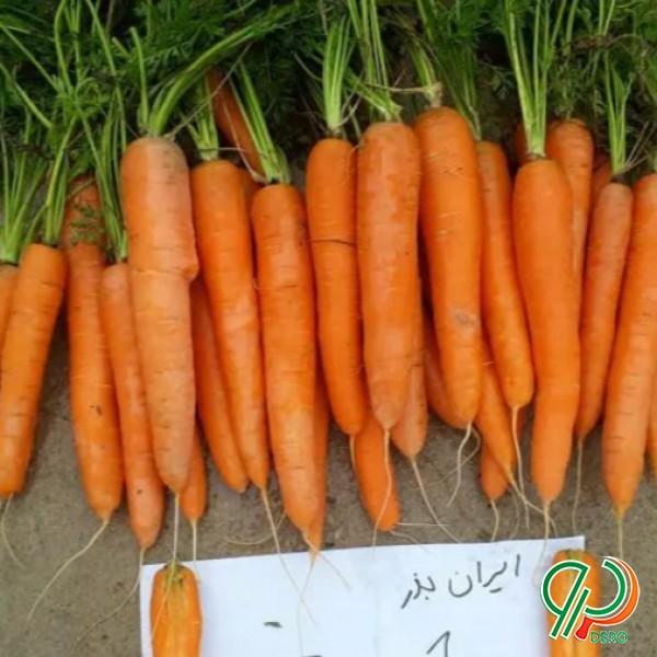 بذر هویج هیبرید ماهان زد کی آی
