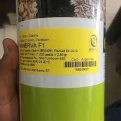 فروش بذر پیاز مینروا