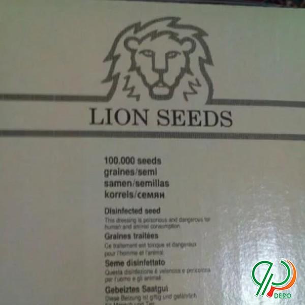 بذر چغندر