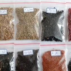 بذر سبزی خوردن برای استفاده خانگی