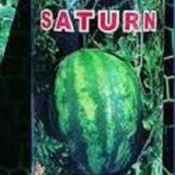 فروش بذر هندوانه و گوجه و...