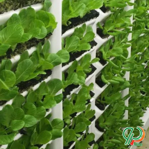 سیستم کشت گلخانه ای و لامپ رشد