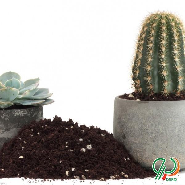 انواع خاک گلدان کاکتوس و معمولی