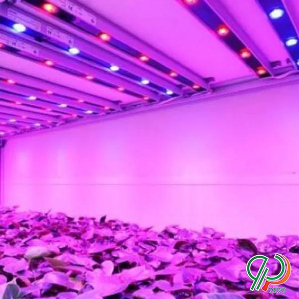 پنل رشد گیاه تولید انواع پنل