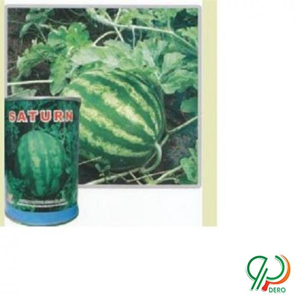 فروش بذر هندوانه ساترن میکادو