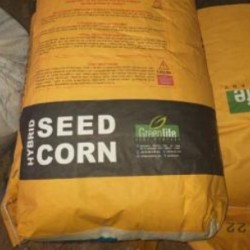 فروش بذر ذرت ترکیه