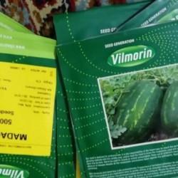 فروش بذر هندوانه و ملون