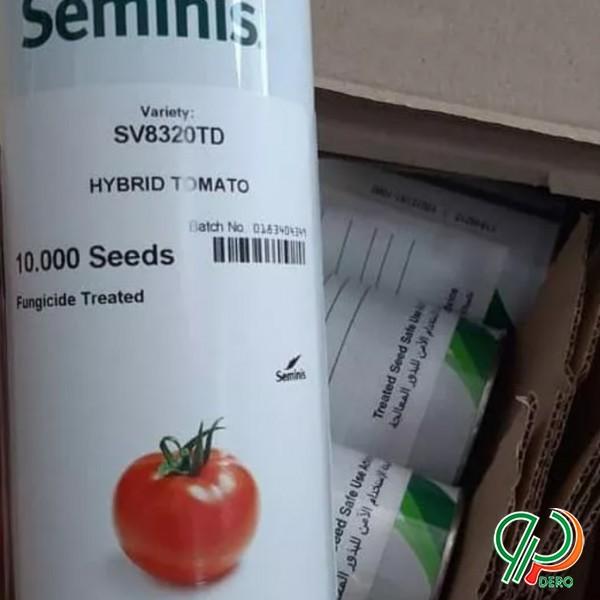 فروش انواع بذر گوجه