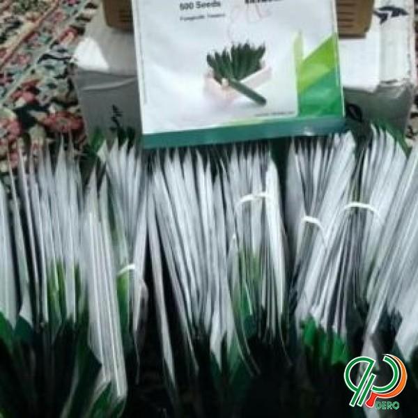 فروش بذر خیار و بذر پیاز با قیمت مناسب