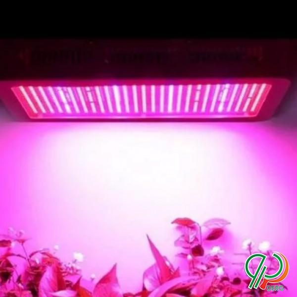 تولید کننده نور های رشد گیاه گلخانه
