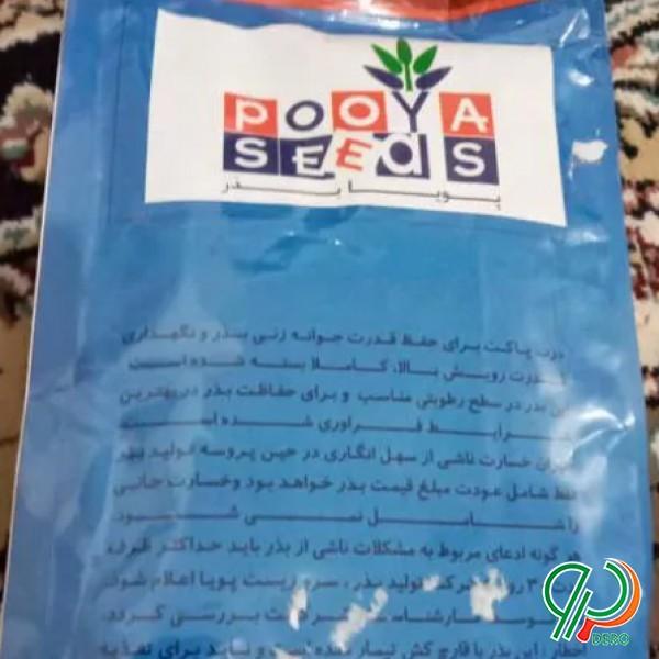 بذر ارگانیک پیاز