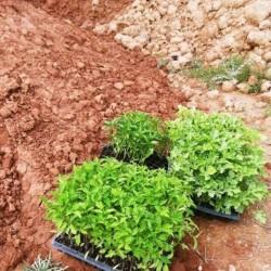 خاک کود دهی و اصلاح خاک