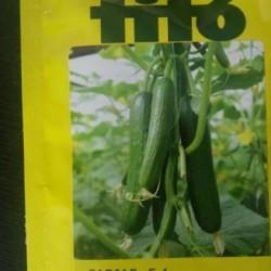 بذر هیبرید خیار گلخانهINCI F1 و CADIAR F1