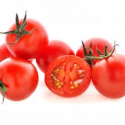 فروش بذر گوجه فرنگی هنگام
