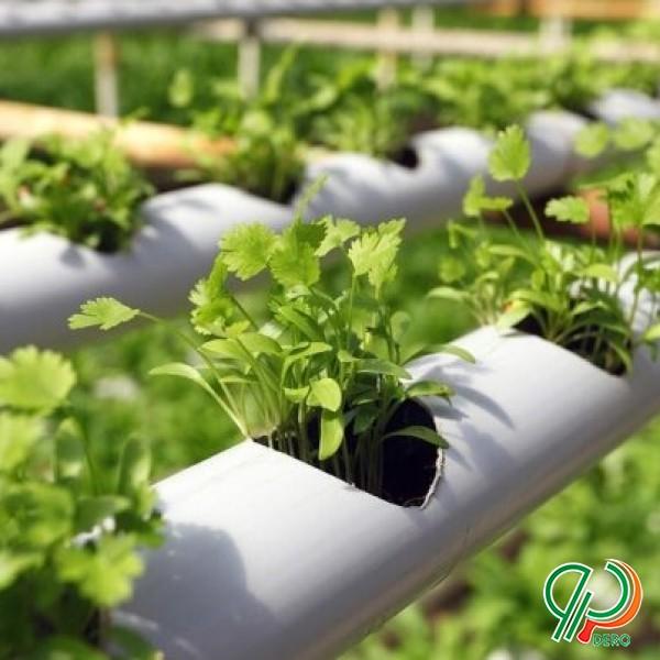 فروش بستر کشت گلخانه های هیدروپونیک