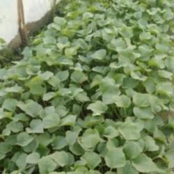 بذر هندوانه و خربزه