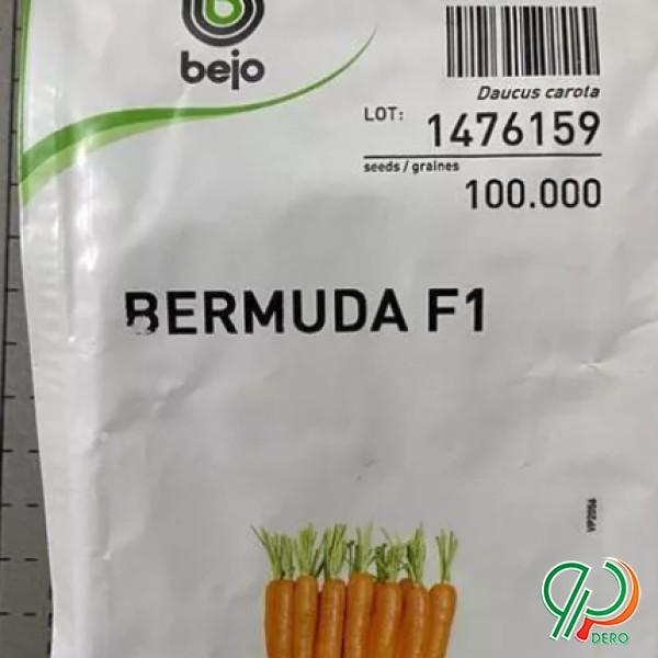 بذر هویج بیجو ناتونا ... وکارورا واپتیما