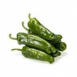 بذر فلفل سبز شیرین کوی pepper koy seeds