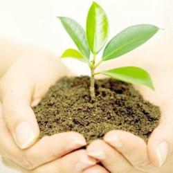 Biobizz & greenhouse فروش کودهای رشد و گلدهی