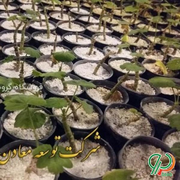 فروش خاک پرلیت ویژه گلخانه
